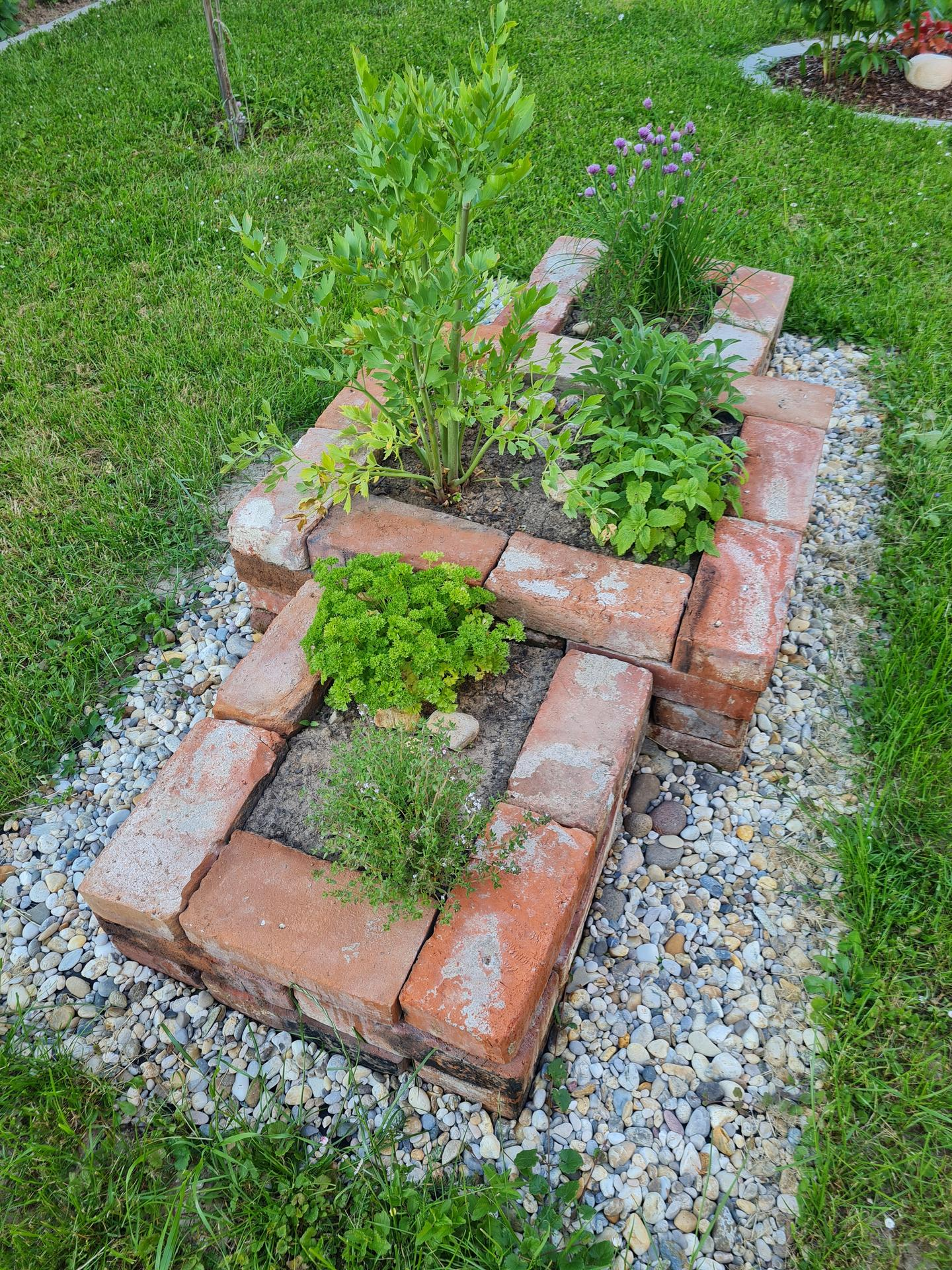 """Naše malé """"pole neorané"""" :o) záhradka 3. rok - Obrázok č. 38"""