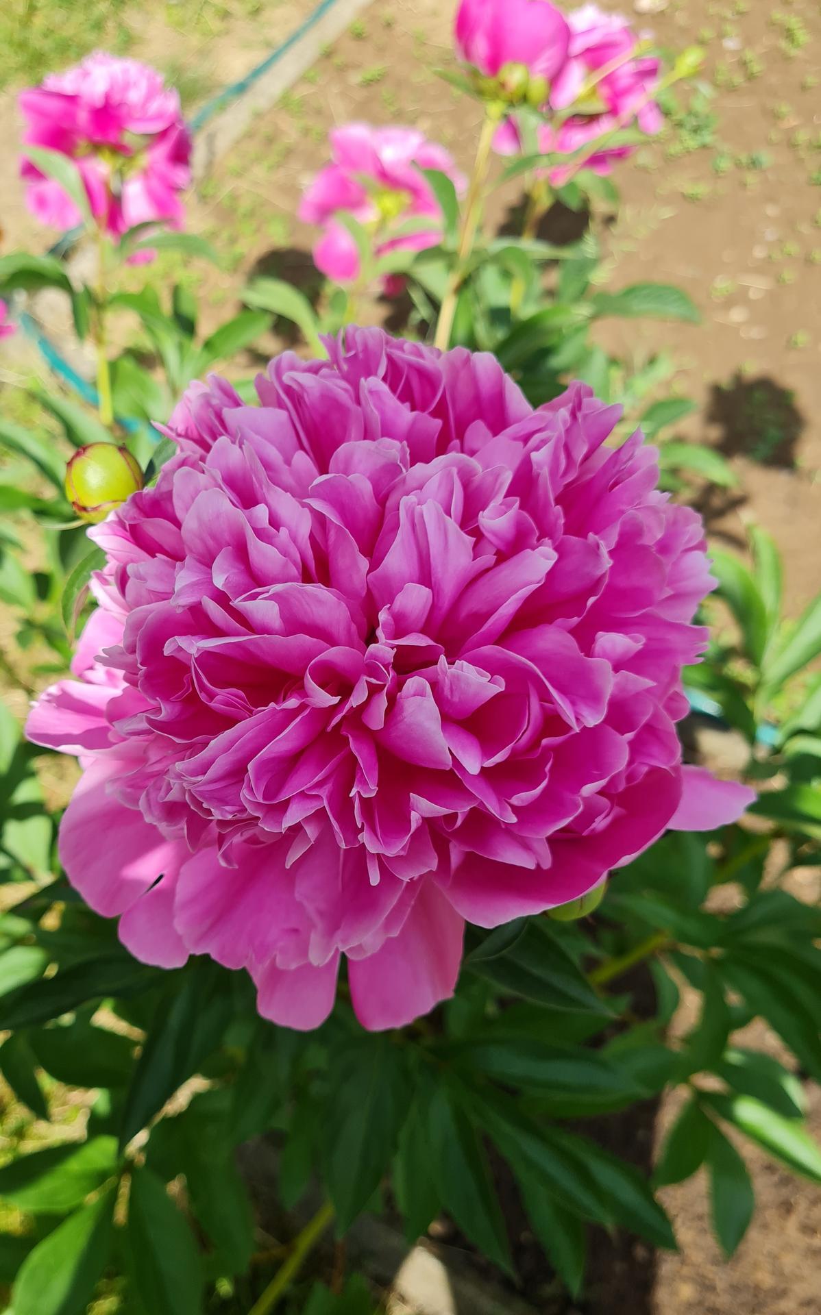 """Naše malé """"pole neorané"""" :o) záhradka 3. rok - Obrázok č. 40"""