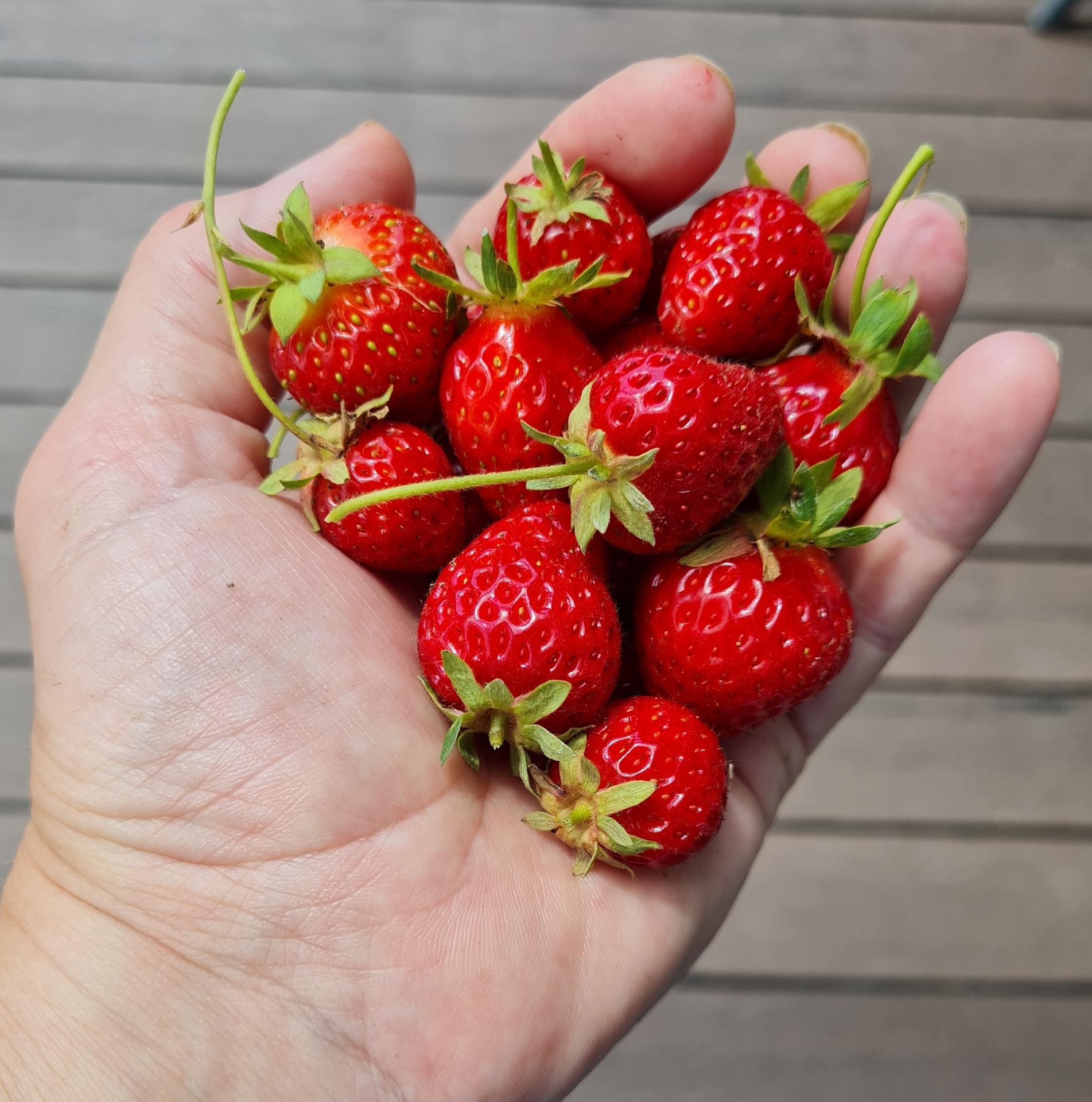 """Naše malé """"pole neorané"""" :o) záhradka 3. rok - Obrázok č. 44"""