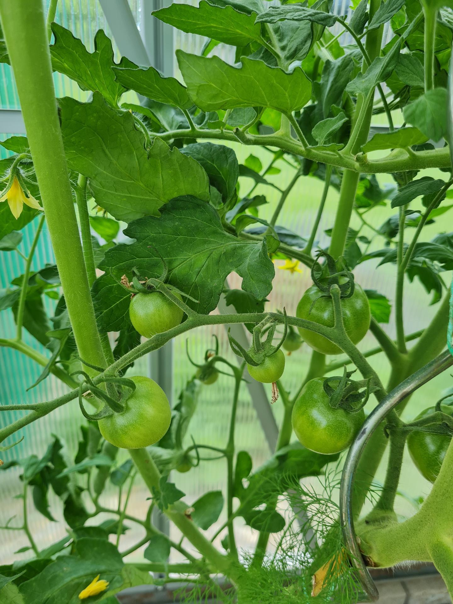 """Naše malé """"pole neorané"""" :o) záhradka 3. rok - Obrázok č. 45"""