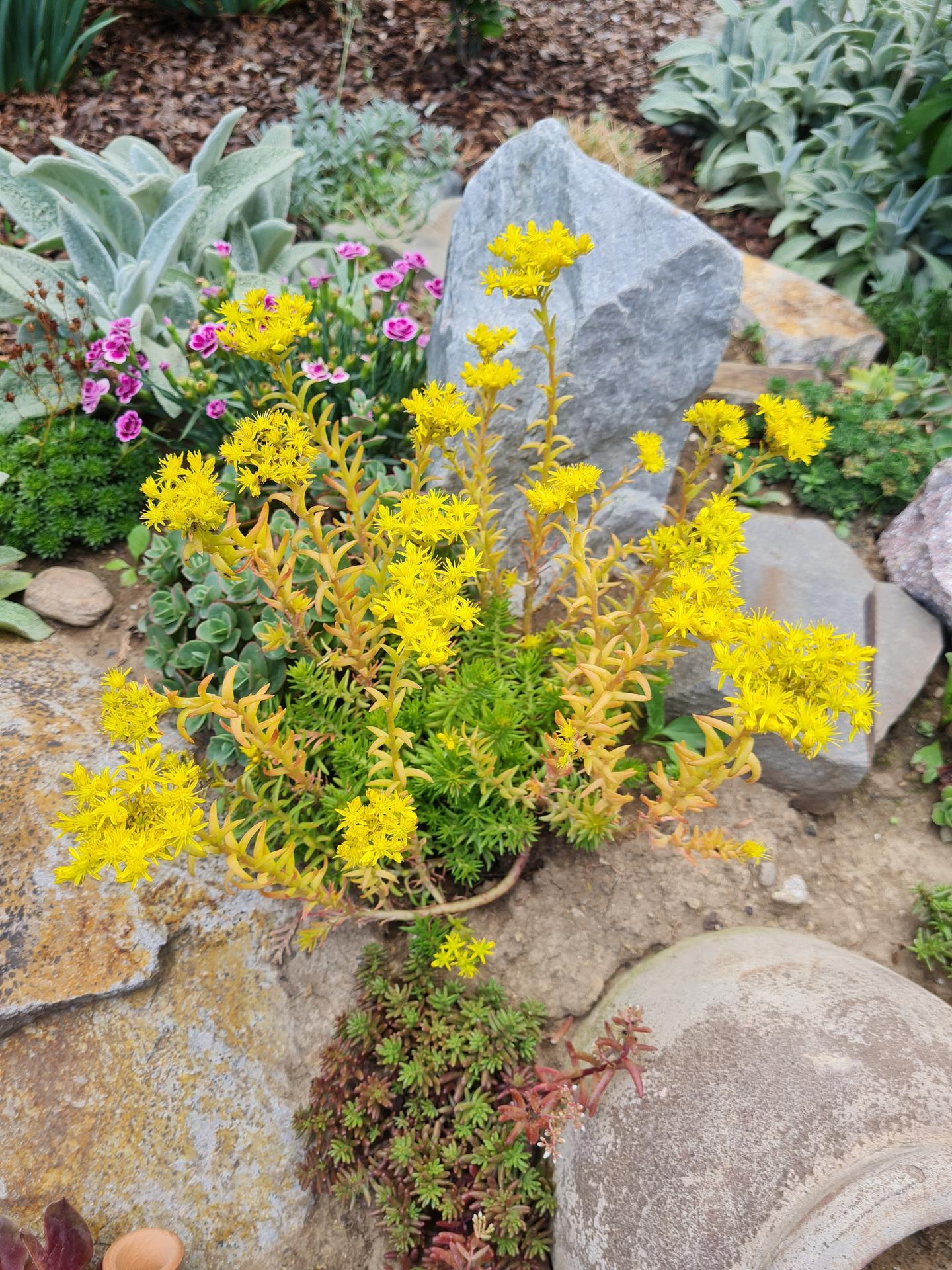 """Naše malé """"pole neorané"""" :o) záhradka 3. rok - Obrázok č. 54"""