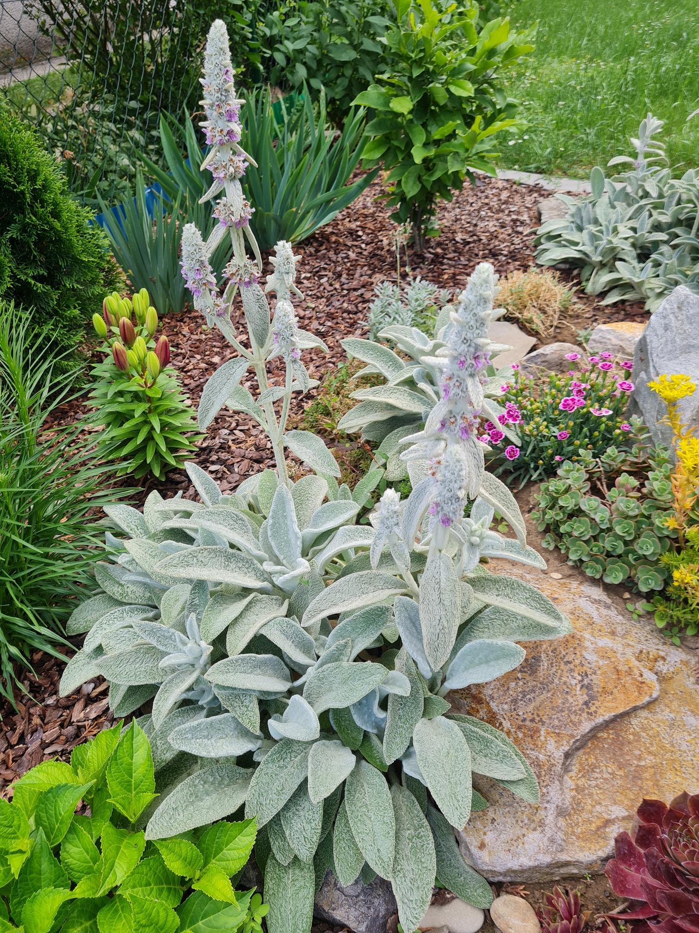 """Naše malé """"pole neorané"""" :o) záhradka 3. rok - Obrázok č. 53"""