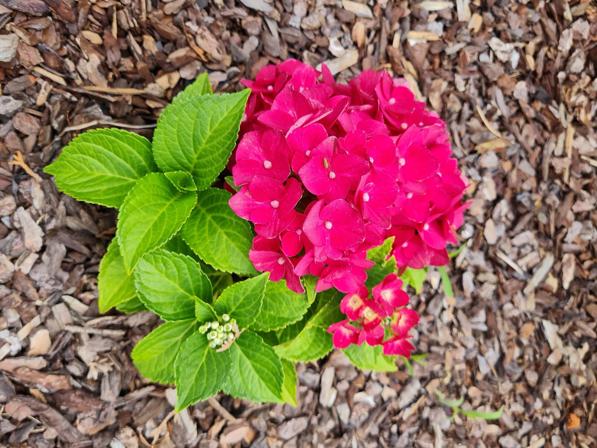 """Naše malé """"pole neorané"""" :o) záhradka 3. rok - Obrázok č. 66"""
