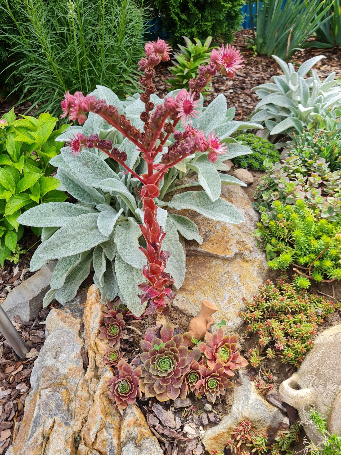 """Naše malé """"pole neorané"""" :o) záhradka 3. rok - Obrázok č. 64"""
