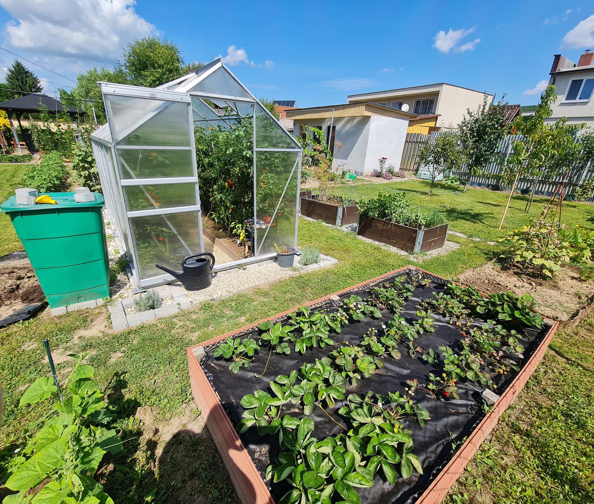 """Naše malé """"pole neorané"""" :o) záhradka 3. rok - ... úžitková časť záhradky ... v skleníku s paradajkami som to tento rok trošku prehnala, je ich véééľa, hotová džungľa :-D"""