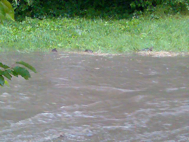 Potok za pozemkem léto 2009 trochu zvedlá hladina