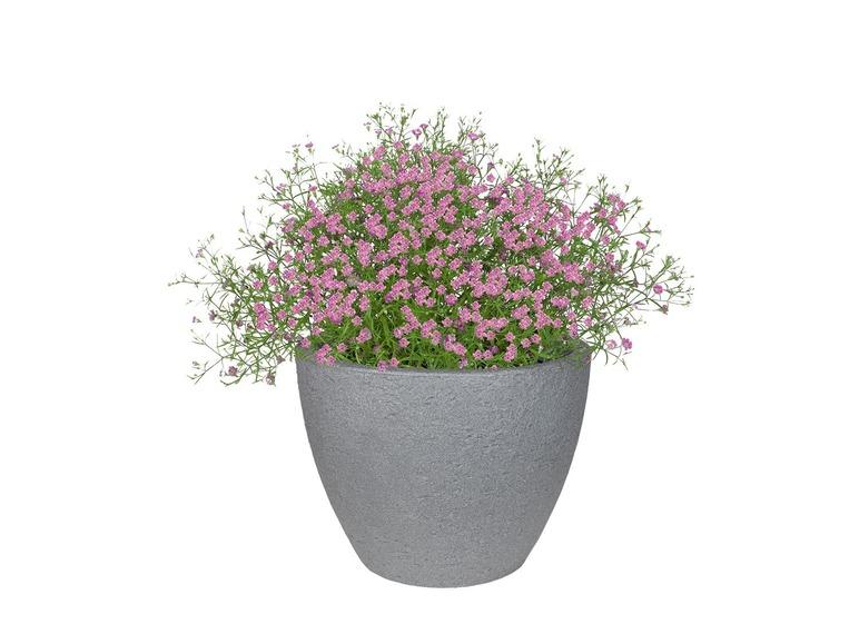 Aké kvety/rastliny najlepšie zasadiť pri dvere do takýchto kvetináčov? Nejaký mix sezonych a trvalých rastliniek.dakujem - Obrázok č. 1