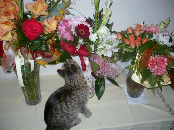 Zuzka{{_AND_}}Feri - milujem kvety