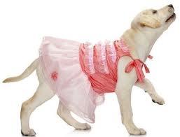 """""""Keby som sa mohla odviazať, moja svadba snov by vyzerala takto..."""" - Aj psík by mal byť štýlový:D"""
