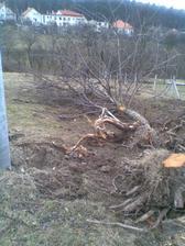 Staré stromy treba ešte popíliť