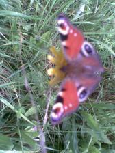 Motýľ, nebál sa, pózoval