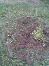 prvý náznak bylinkovej mini záhradky
