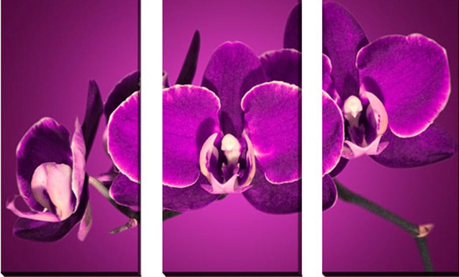 3-dielny obraz na plátne 3x30x70cm Kvet fialový - Obrázok č. 1