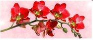 Obraz na plátne 38x100cm KVETY červeno-ružový,