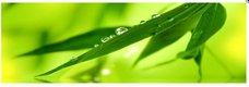 Obraz na plátne 45x140cm LISTY a ROSA zelený,