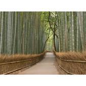 Fototapeta, Bambus, 315 x232cm,