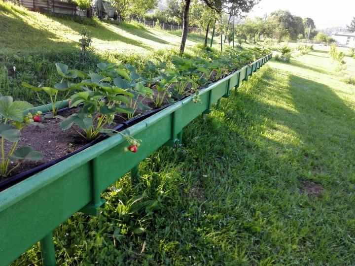 Ako som robil vyvyseny zahon na jahody - Obrázok č. 12
