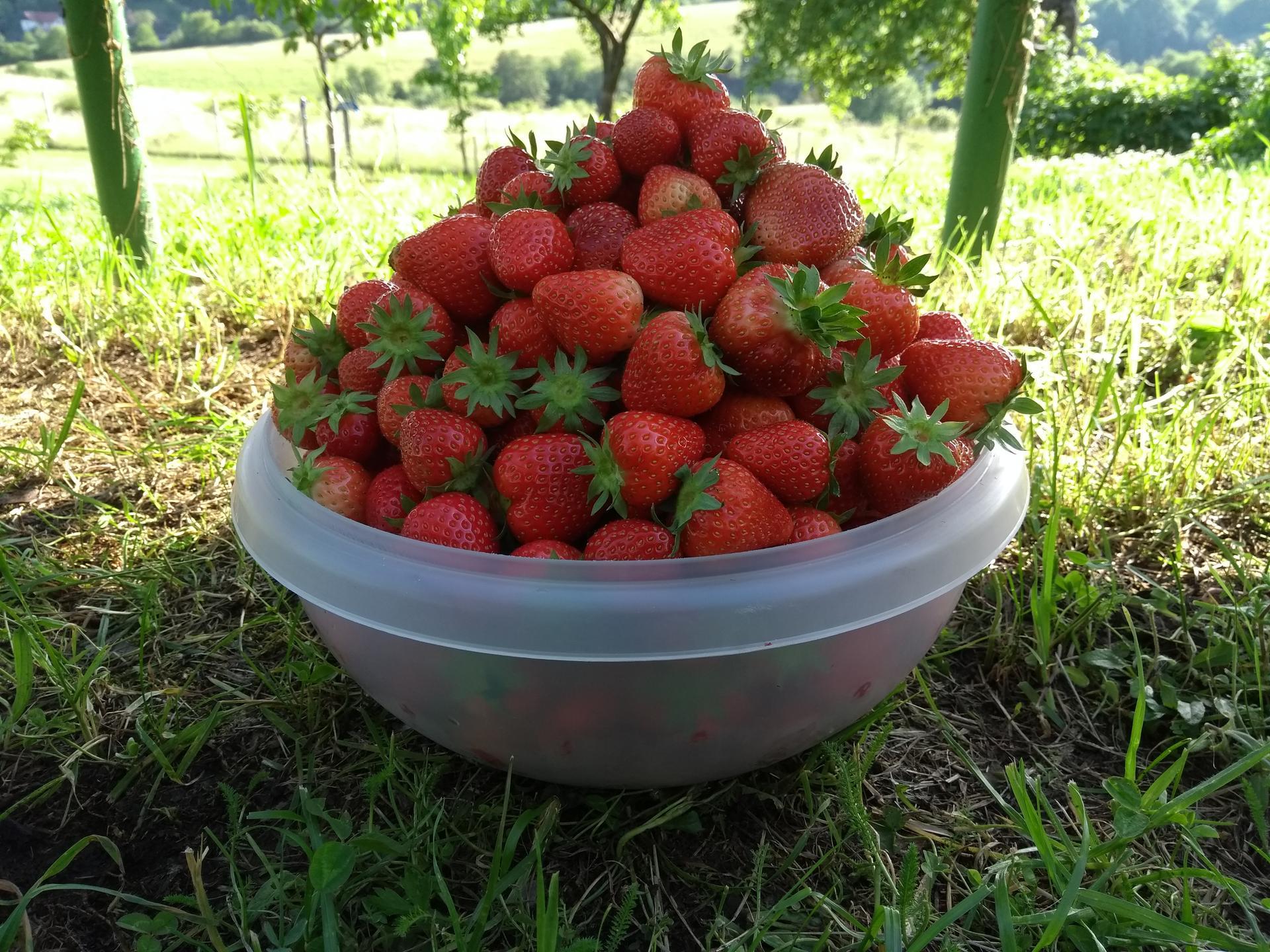 Ako som robil vyvyseny zahon na jahody - Obrázok č. 28