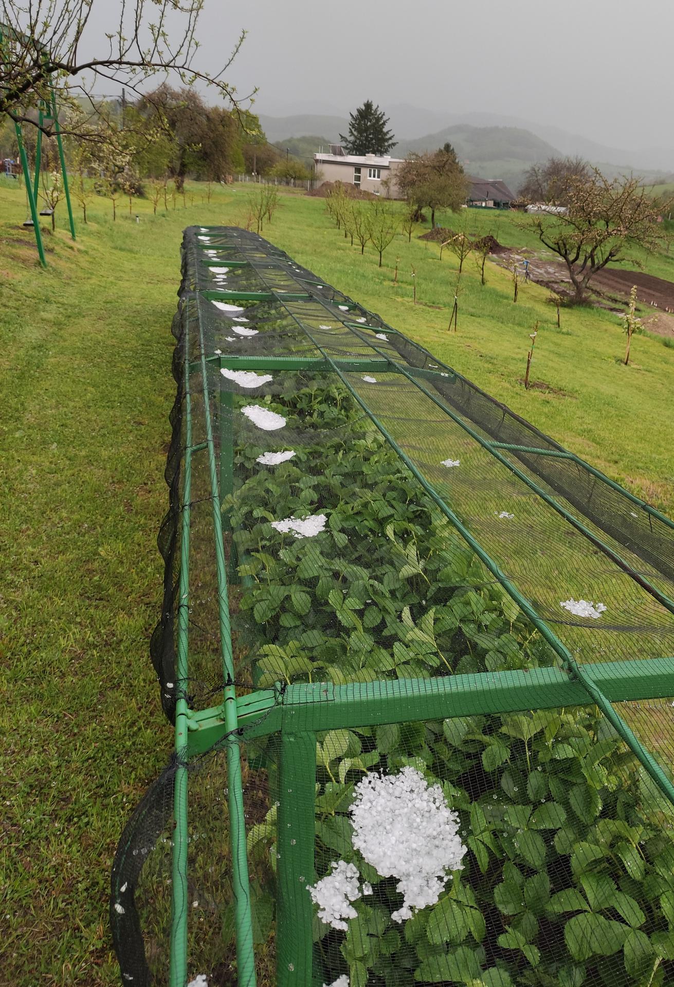 Ako som robil vyvyseny zahon na jahody - Obrázok č. 29