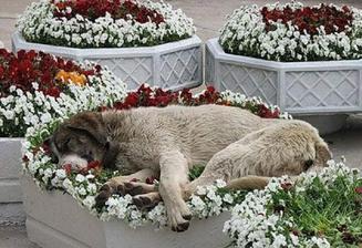 takhle nějak spí náš velkej ve vřesu :-)