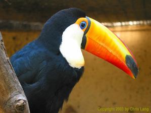 Můj nejoblíbenější brazilský pták