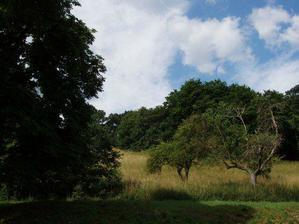 ...divočina za zahradou...a přitom do centra je 10 min pěšky