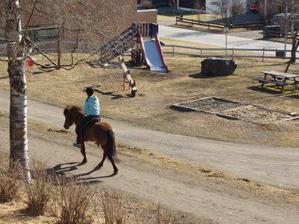 Takovéhle hřiště máme téměř pod okny. Koníci teda pobíhají jen občas.