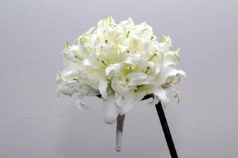 vítězná květinka
