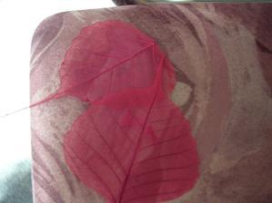 možná použiji k dekoraci - skelety listů