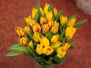 Tulipány budou určitě