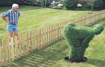 nízky plot a zvedavý sused