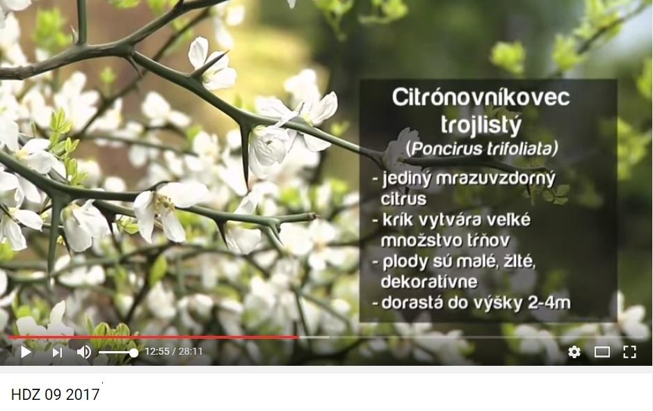 Herbár kvetín, kríkov a stromov - Obrázok č. 10