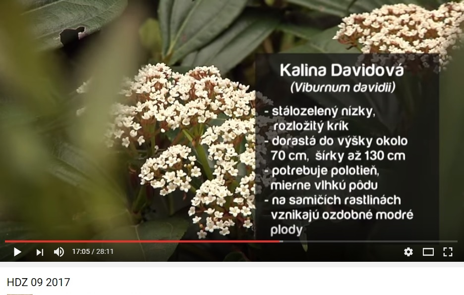 Herbár kvetín, kríkov a stromov - Obrázok č. 11