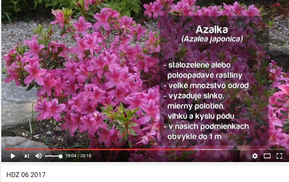 Herbár kvetín, kríkov a stromov - Obrázok č. 29