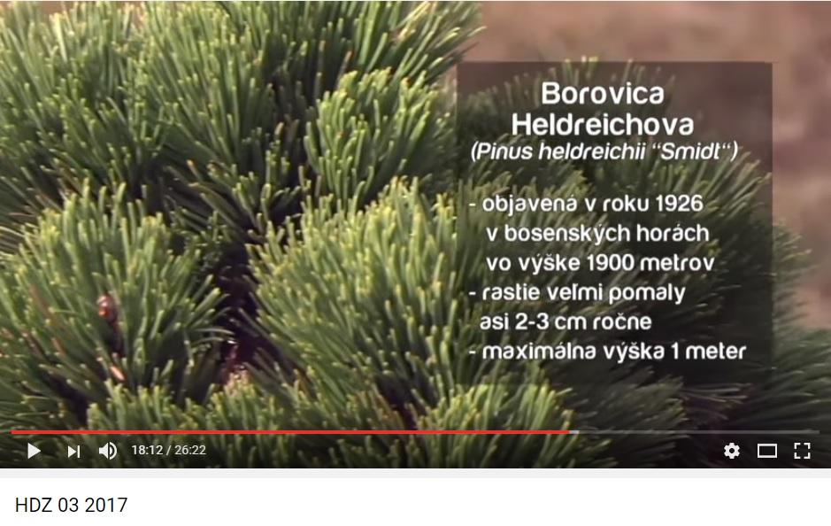 Herbár kvetín, kríkov a stromov - Obrázok č. 34
