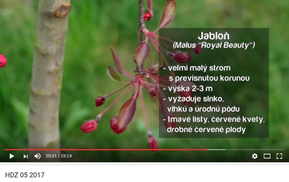 Herbár kvetín, kríkov a stromov - Obrázok č. 40