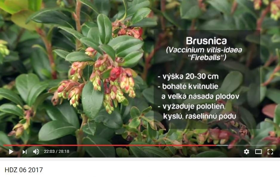 Herbár kvetín, kríkov a stromov - Obrázok č. 43