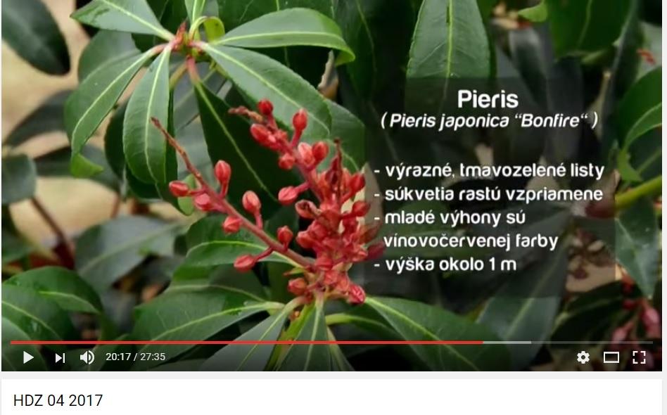 Herbár kvetín, kríkov a stromov - Obrázok č. 47