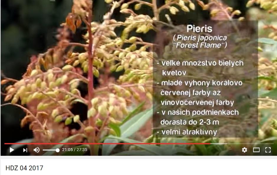 Herbár kvetín, kríkov a stromov - Obrázok č. 49
