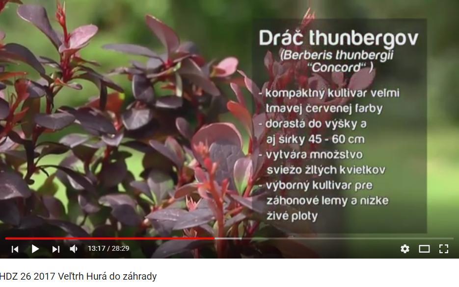 Herbár kvetín, kríkov a stromov - Obrázok č. 50