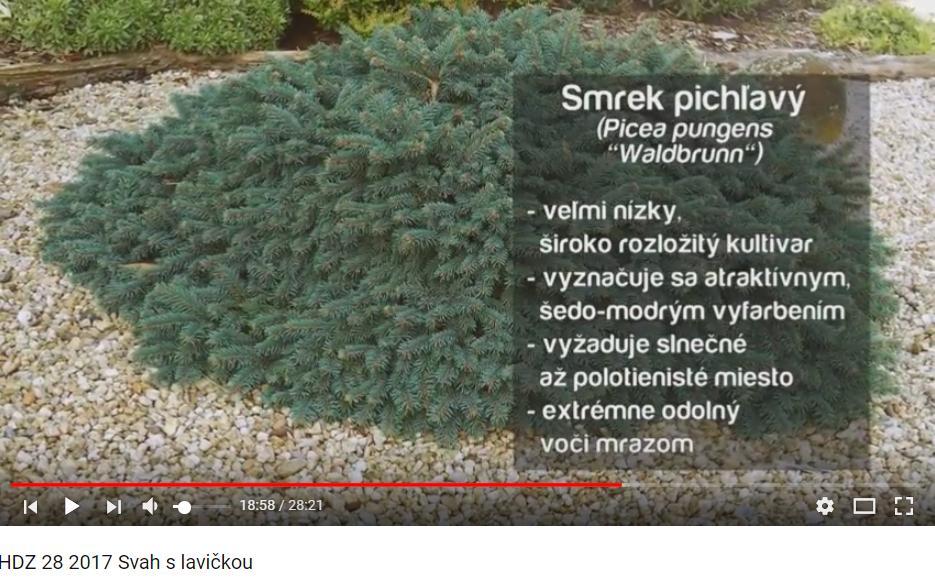 Herbár kvetín, kríkov a stromov - Obrázok č. 55