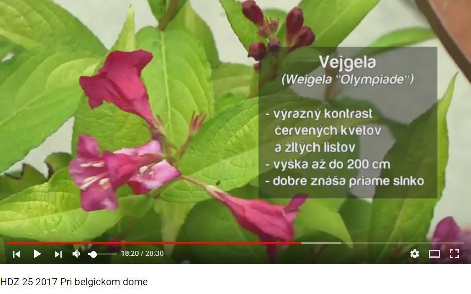 Herbár kvetín, kríkov a stromov - Obrázok č. 60