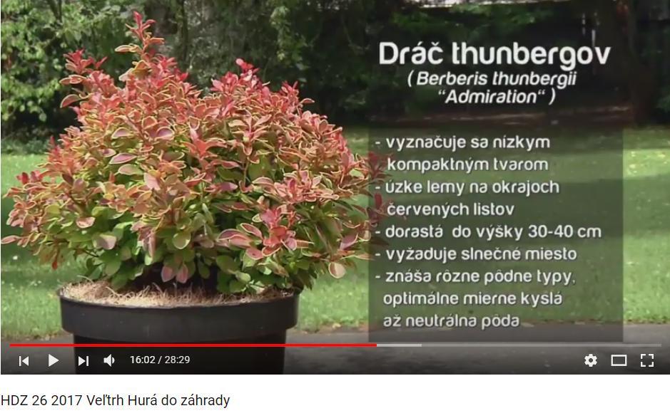 Herbár kvetín, kríkov a stromov - Obrázok č. 61