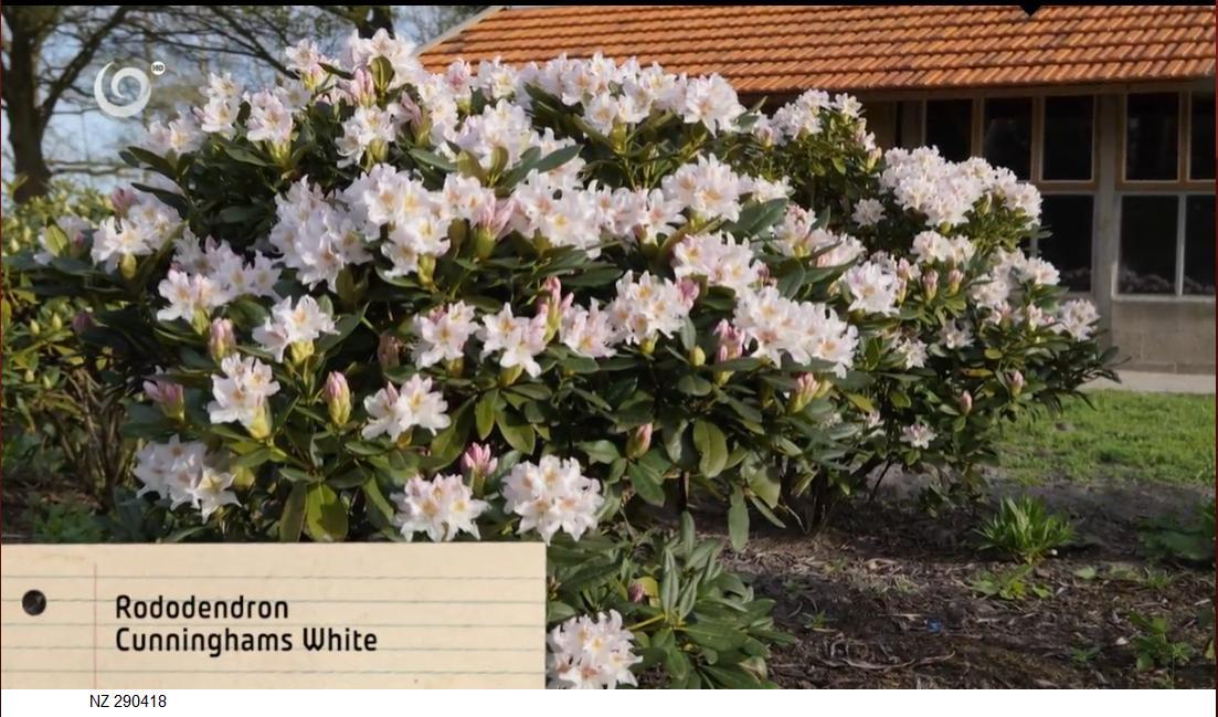 Herbár kvetín, kríkov a stromov - Obrázok č. 64