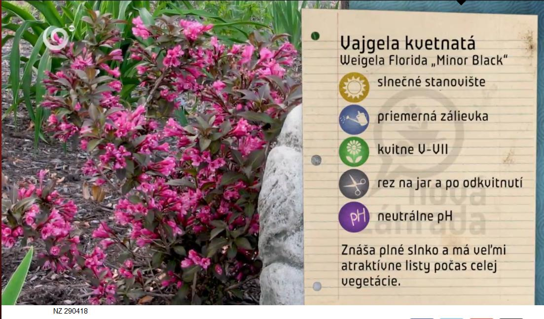 Herbár kvetín, kríkov a stromov - Obrázok č. 65