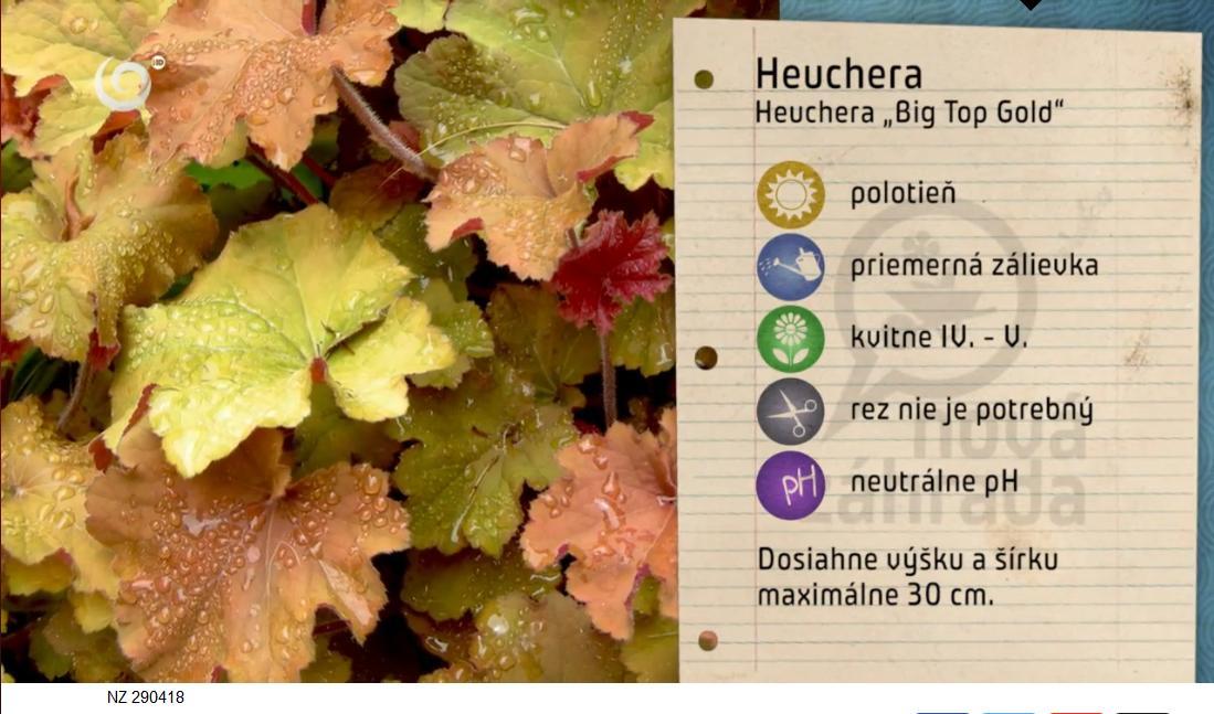 Herbár kvetín, kríkov a stromov - Obrázok č. 66