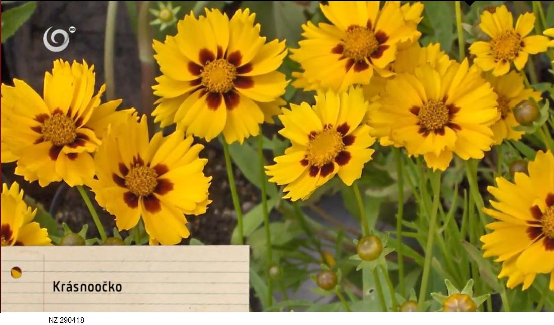 Herbár kvetín, kríkov a stromov - Obrázok č. 67