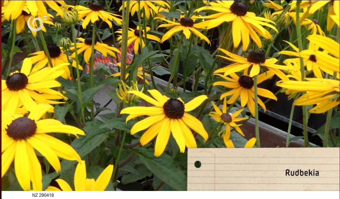 Herbár kvetín, kríkov a stromov - Obrázok č. 68