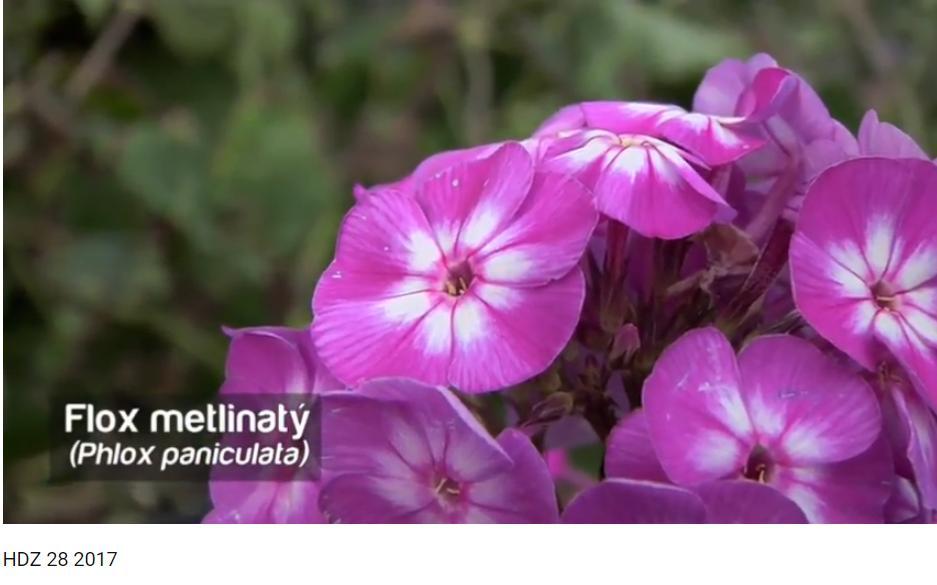 Herbár kvetín, kríkov a stromov - Obrázok č. 70