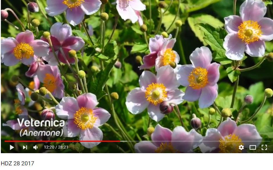 Herbár kvetín, kríkov a stromov - Obrázok č. 71